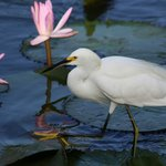 Egret at the hotel