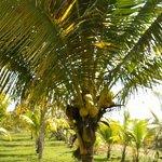 Enjoy a full length of Caribbean setting