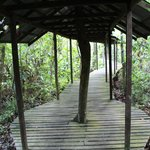 hornbill walkway behind lodge