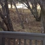 Deer just a few feet from our private patio (Cottage #6)