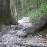 percorso nel bosco