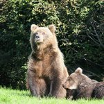 Mom and cub near lodge