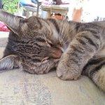 Chat au repos au bord de la piscine