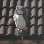 The 'real' owl......Yes dear....it's real.......