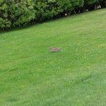 Little wild rabbit in the garden-view from the restaurant