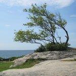 Tree at Fort Phoenix