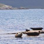 We saw so many seals!
