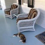 verandah and our morning visitor