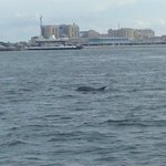 One of the many dolphins we saw.