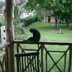 Les visiteurs de tous les jours sur les terrasses !! gentils !!