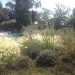 Fleurs et piscine