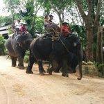 Leaisurely 45 minute elphant trek