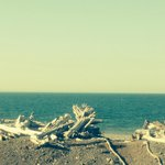 Foto de Driftwood Park Retreat
