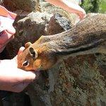 feeding the squirrels