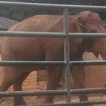 Elephant in safari