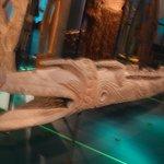 Sezione dell'Oceania: il coccodrillo