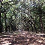 Oak avenue beyond road
