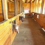 Li'l Country Store and Miniature Horse Farm