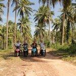 пальмовая аллея на острове
