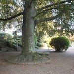 Kissing tree