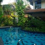 La piscine et la végétation