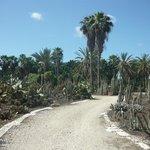 Сад кактусов на территории парка