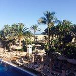 Palm trees around pool.