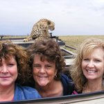 Cheetah on roof of jeep!
