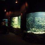 aquarium interior