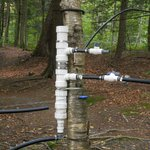 tubing system to collect sap