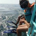tour para ver al tiburon ballena