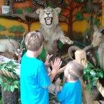 Part of the Safari Room
