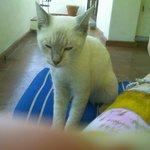 Mexi Azul el gato