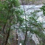 木々の茂みの無効につり橋が