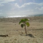 Little baby plant alone on the beach