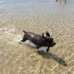 Happy Dog at Sandbanks