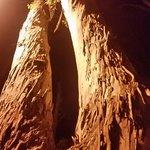Trees.on eucalyptus  street (main shopping and bars ) all famiy friendly