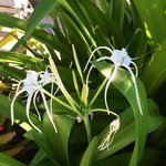 Tropical flowers everywhere!