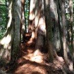 Indrukwekkende bomen