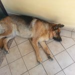 The dog sleeping at the entrance.