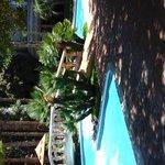 Enjoy a tropical feel by the pool