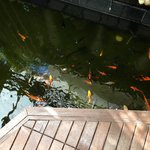 Fishes at the entrance