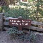 Percorso per le sequoie