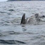 Delfin- og hvalsafarier