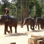 Elephants entering show