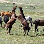 Pryor Mountain Wild Mustang Center