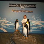 lots and lots of 'live' penguins