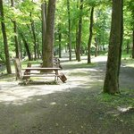 Kittatinny River Beach Campground Foto