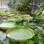 Botanischer Garten Kiel