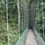 Hanging bridge outside of the lodge